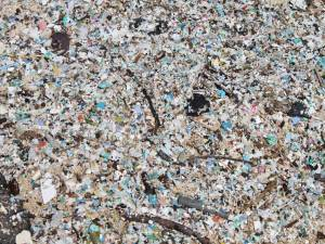 One meter by one meter surface sample at Kamilo Point on the Big Island, Hawaii. More than 84,000 pieces of micro-plastic were counted. (Photo credit: Nick Mallos)