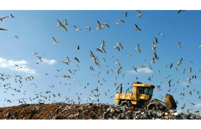 2016.01.11-NewsFeed-P&G Zero Waste-IMAGE
